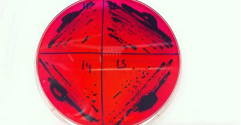 salmonella ncsu plate.jpg