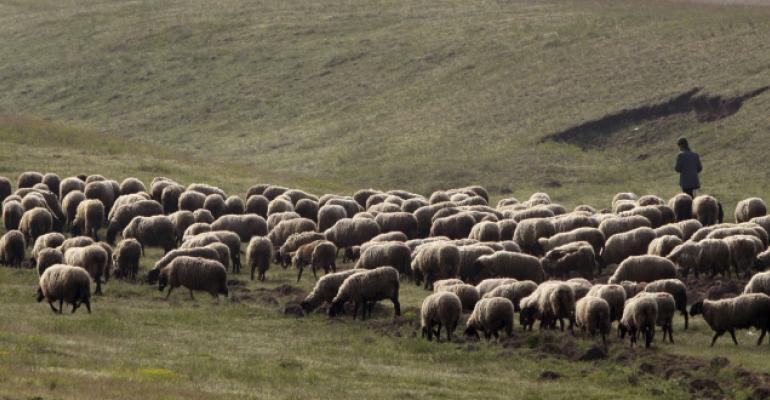 sheep on pasture_Nenadpress_iStock-481454727 cropped.jpg
