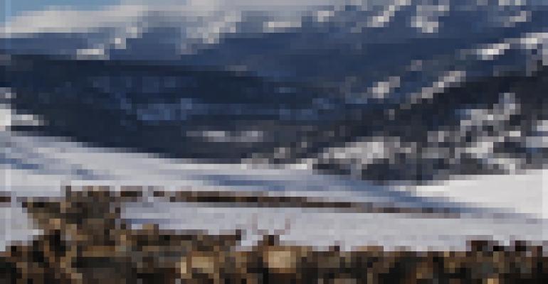elk feeding grounds in winter