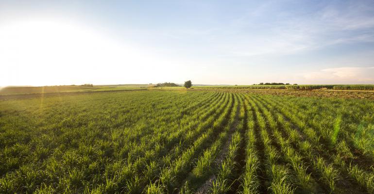 sugarcane field in Brazil