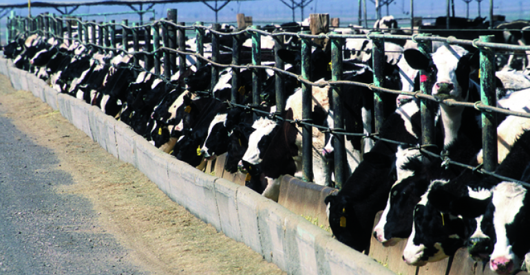 Calf starter physical diet forms evaluated
