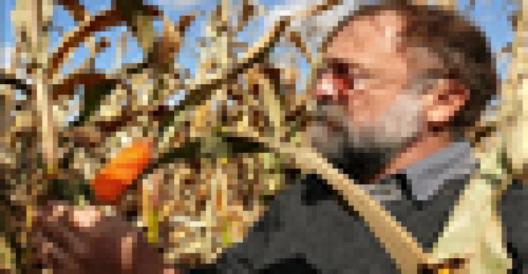 Natural gene selection produces orange corn rich in provitamin A