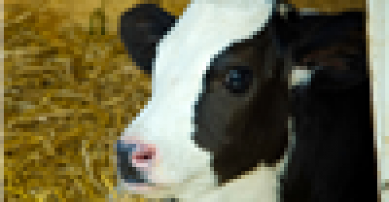 Reducing age at first breeding, calving possible