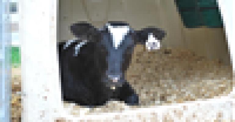 Keep calves healthy by reducing pathogen exposure