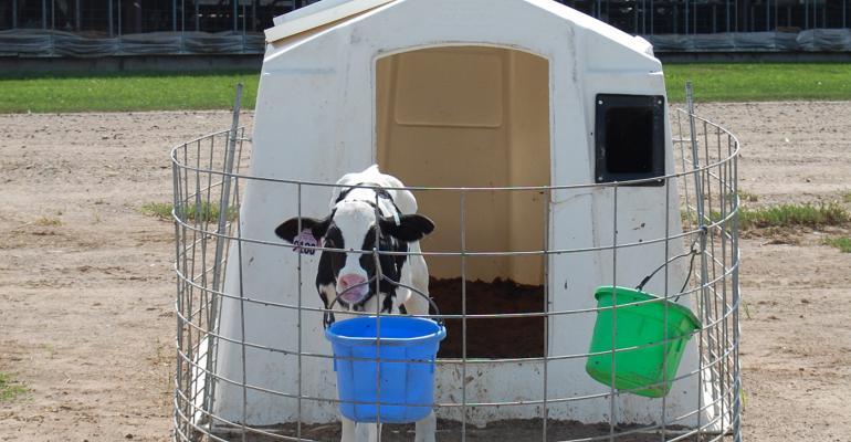 Training helps set up automatic calf feeding programs