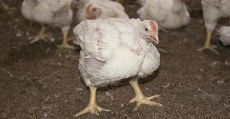 Mississippi researchers cool poultry with sprinklers