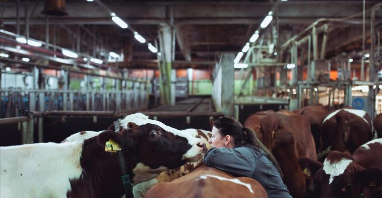 Dairy cow genotype may be linked to methane emissions