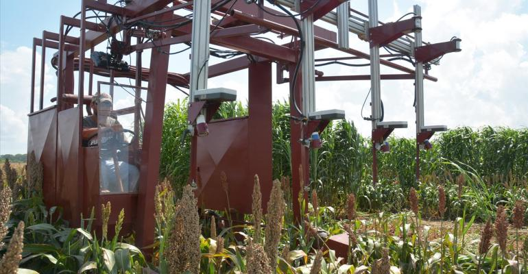 Phenotyping helps research without labor, machine harvesting