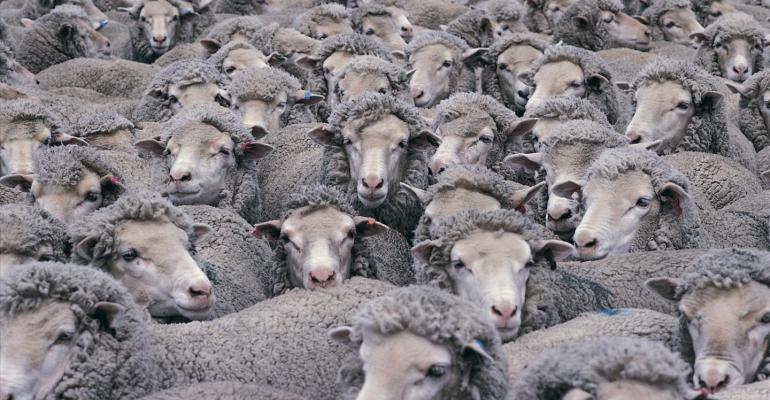 USDA surveying sheep operations