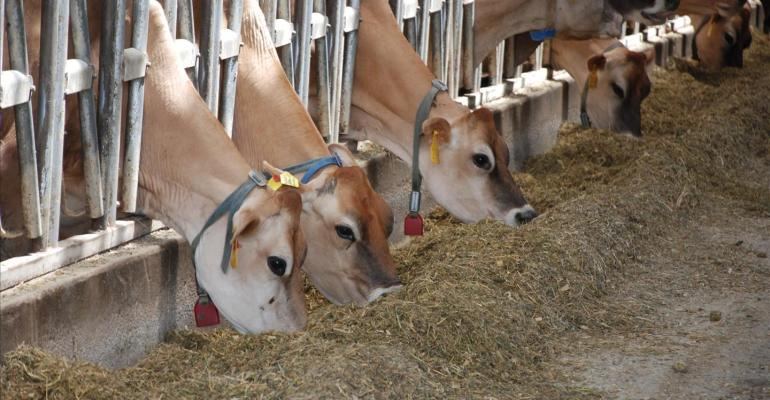 Diet modeling validates live yeast as rumen modifier