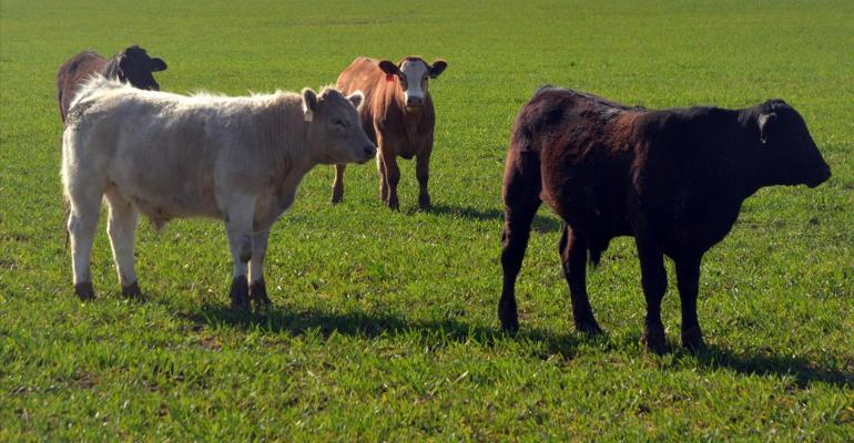 Mixing spring crops, winter wheat boosts forage grazing