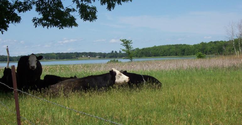 waynes cows4.jpg