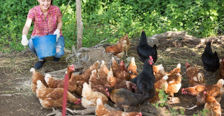 woman feeding backyard chickens