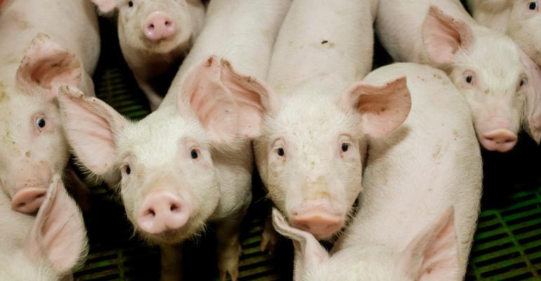 young pigs_AlexanderLipko_iStock_Thinkstock-545774378.jpg