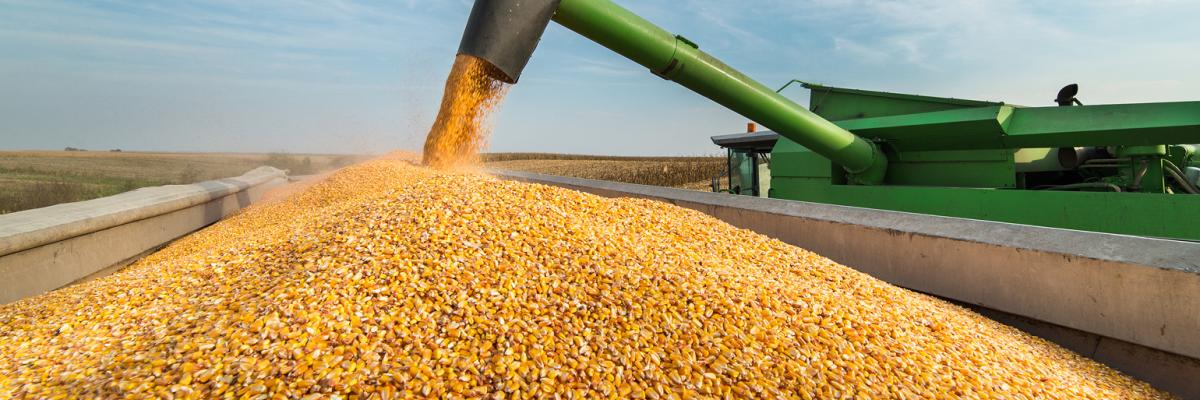 2018: What a Year for Corn Growers
