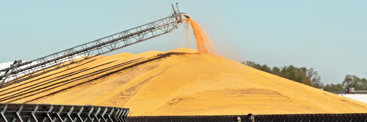 Don't let it go to waste: 10 tips for long-term grain storage