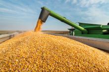 Kemin Clean up Grain