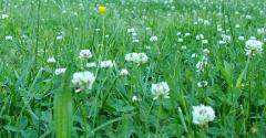 Clemson grass390.jpg