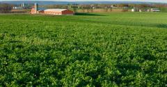 alfalfa field-shutterstock_98642435.jpg