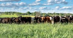 cattle in pasture_Jacqueline Nix_iStock_Thinkstock-669220096.jpg