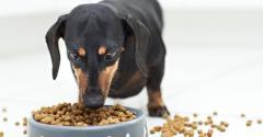 dog-canine_shutterstock_97464794.jpg