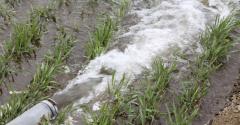 water pipe in farmland_Inzyx_iStock-476623275.jpg