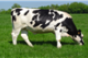 USDA releases first report from 'Dairy 2014' study